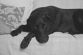 Niedergeschlagener Hund